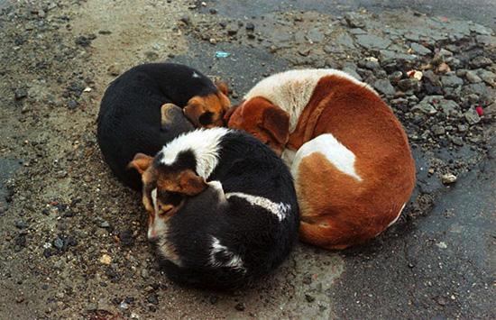 Eloise-Leyden-Slum-Dogs-10