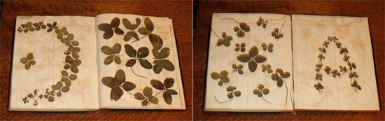 Four-Leaf-Clover-3