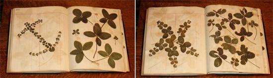 Four-Leaf-Clover-5