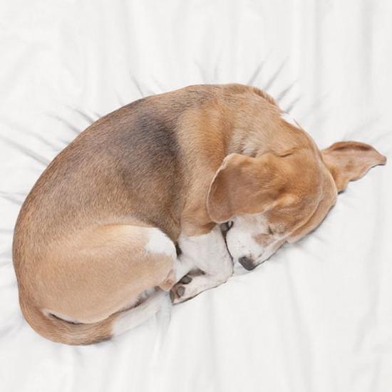 Bob-puppy-bed-3